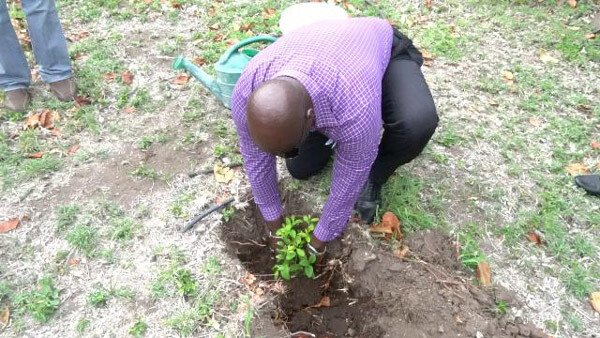 Deputy PM Plants Fruit Tree