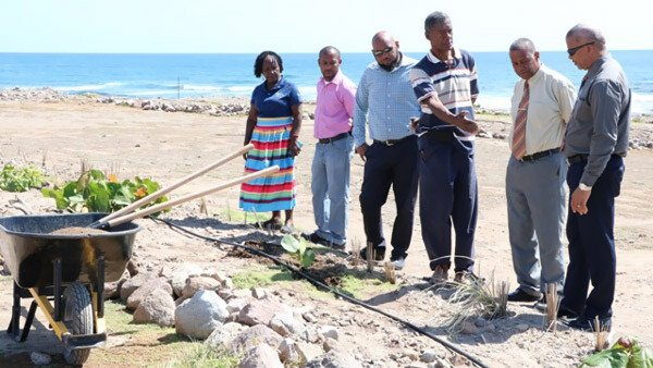 New River reforestation project - Nevis