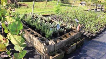 Nursery For Plant Propagation - Nevis Island