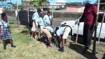 Tree Planting In Nevis