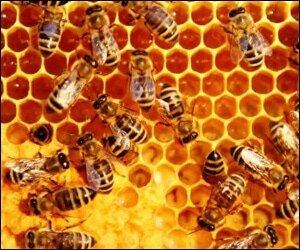 Beekeepers Cooperative Honey Farm