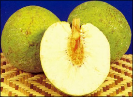 Breadfruit In Their Natural State