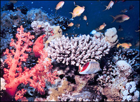 A Coral Reef of St. Kitts - Nevis