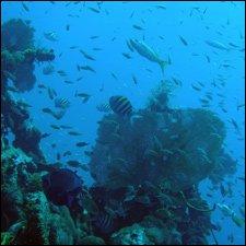 Diving Off St. Kitts - Nevis