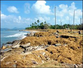 Four Seasons Beach After Hurricane Omar