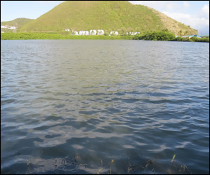 St. Kitts Aims To Protect Frigate Bay Salt Pond
