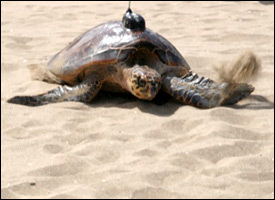 St. Kitts – Nevis Observes Biological Diversity Day