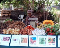 Locally Grown Fruits and Vegetables For Sale