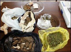 Marijuana Found In St. Kitts - Nevis Police Raid