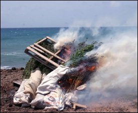 Marijuana Plants Burn On Nevis Beach