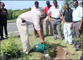 Nevis Agricultural Minister - Robelto Hector - Plants Jujube Tree