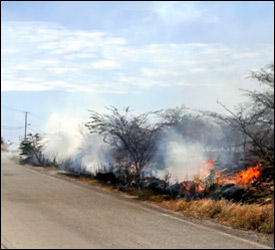 Brush Fire at Long Point Road