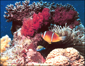 Caribbean Coral Reef Formation