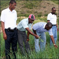 Onion Crop In New River Gets An Inspection