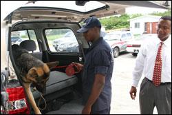 Nevis K9 Dog