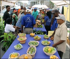 "Nevis' ""Mango Madness Festival"" A Huge Success"