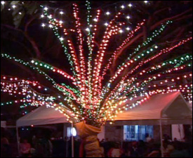 Nevis Holds Christmas Tree Lighting Ceremony