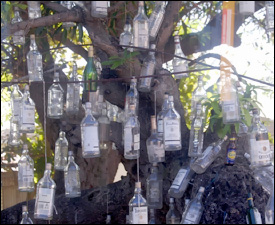 Rum Bottles Hanging From A Tree In St. Kitts