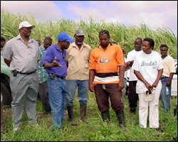 St. Kitts Farmers Discuss Sustainable Agriculture