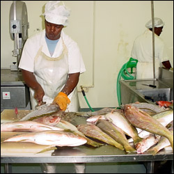 St. Kitts - Nevis Fish Processing Plant