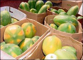 Locally Grown Papayas Ready For Shipment
