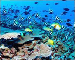 St. Kitts Reef Life
