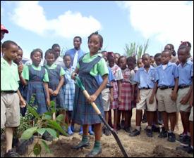 St. Kitts School Children Planting Trees