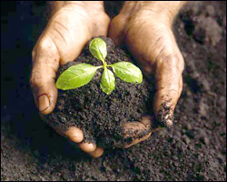 Sustainable Agriculture Is Growing!