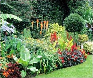 Tropical Flower Gardens