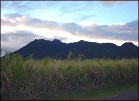 Mt. Liamuiga (Mt. Misery), St. Kitts